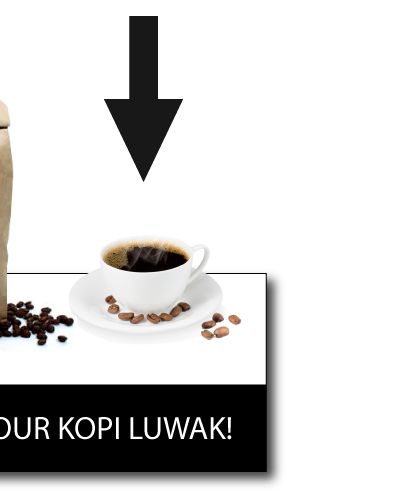 kopi luwak production step 7 - the most expensive coffee in the world