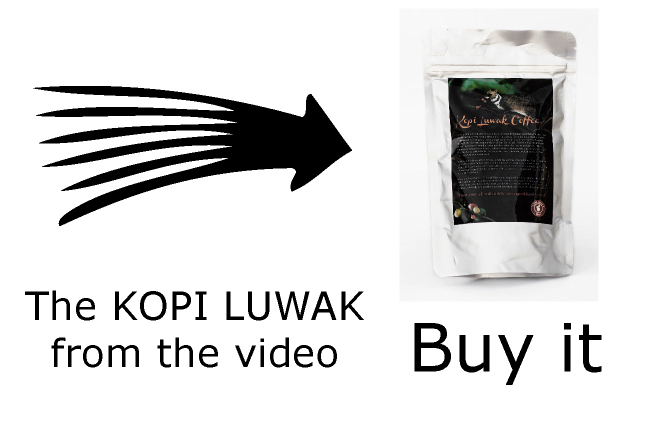 buy Kopi Luwak from the video - most expensive coffee